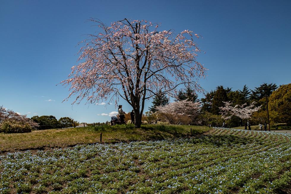 190411昭和自然公園980-5888
