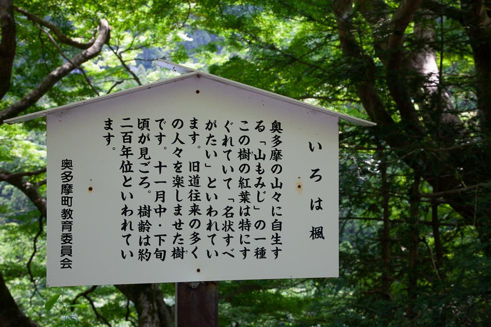 160604むかし道980-7791