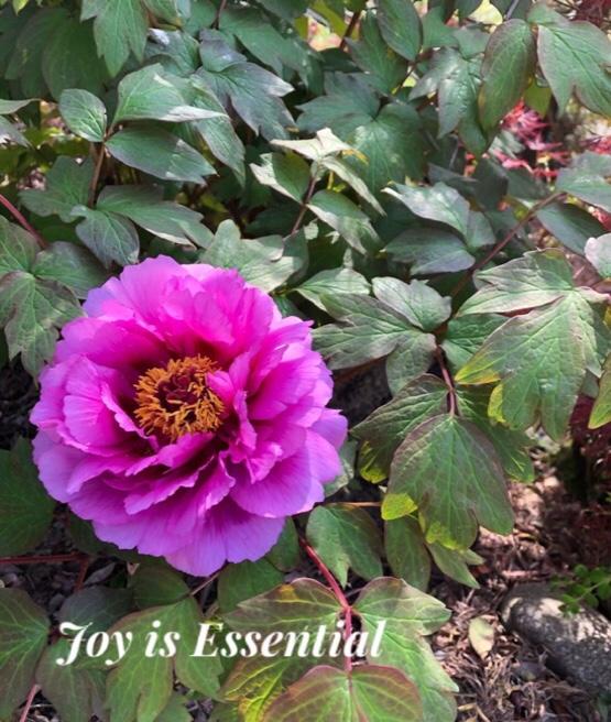 Joy is essential