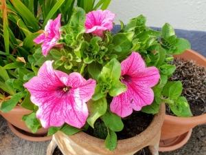 gardening05192