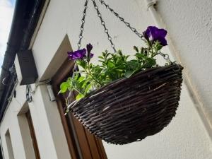 gardening0519