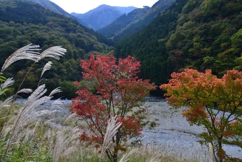 「鮮やかに」  徳島県三好市東祖谷名頃