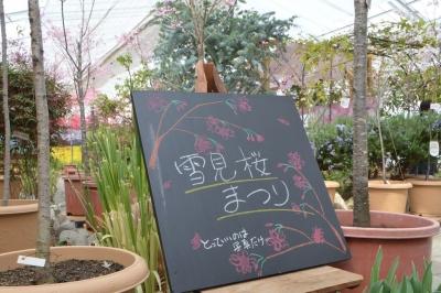 habu-sakura07.jpg