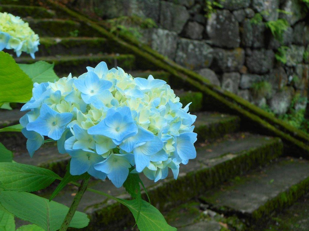 kamegajo121.jpg
