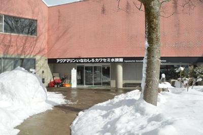 kawasemi102.jpg