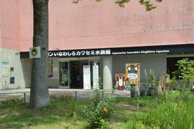 kawasemi202.jpg