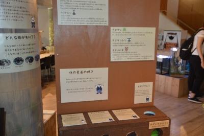 kawasemi204.jpg