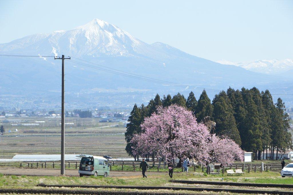 misatosakura05.jpg