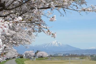 misatosakura12.jpg