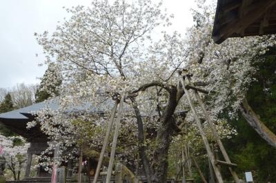 misatosakura24.jpg