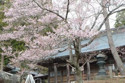 misatosakura31.jpg