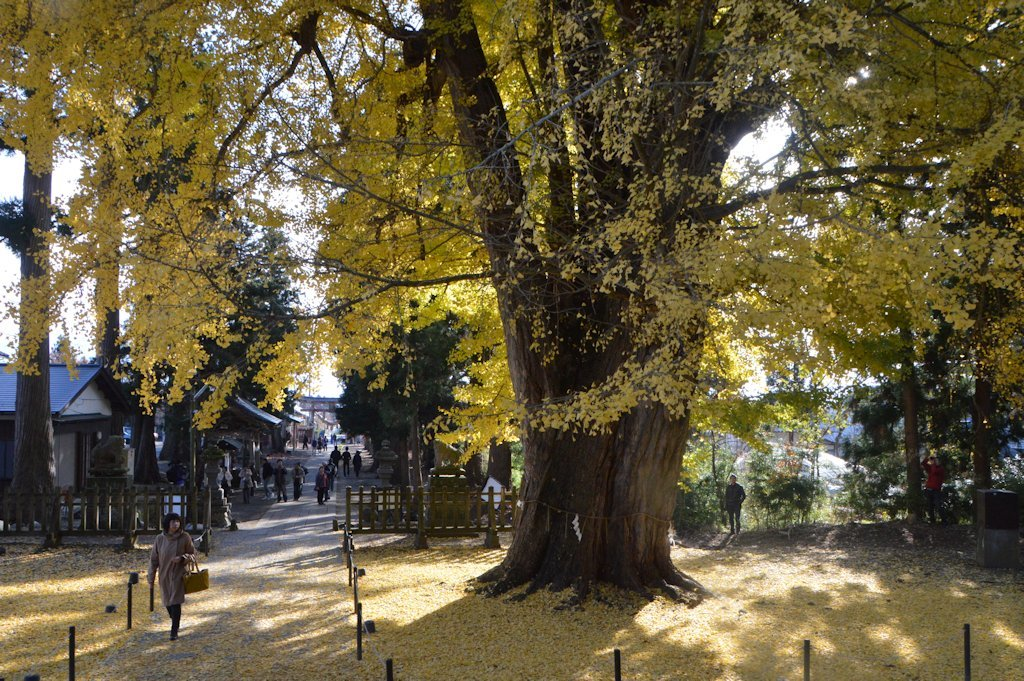 nagatoko07.jpg