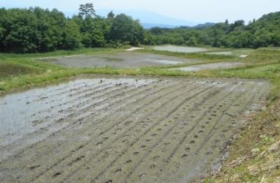 takasatotanada120.jpg