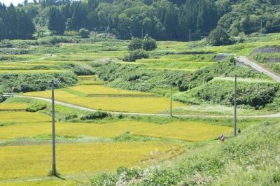 takasatotanada170.jpg