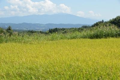 takasatotanada175.jpg