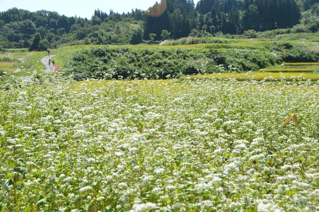 takasatotanada177.jpg