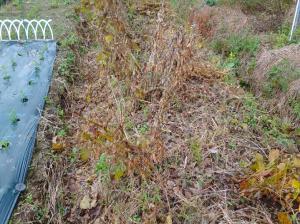 12月2週 <大豆の収穫>