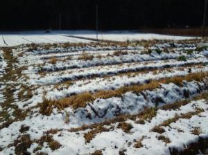 2月2週 <南関東の雪>