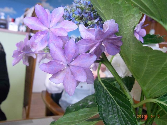 新水仙の花