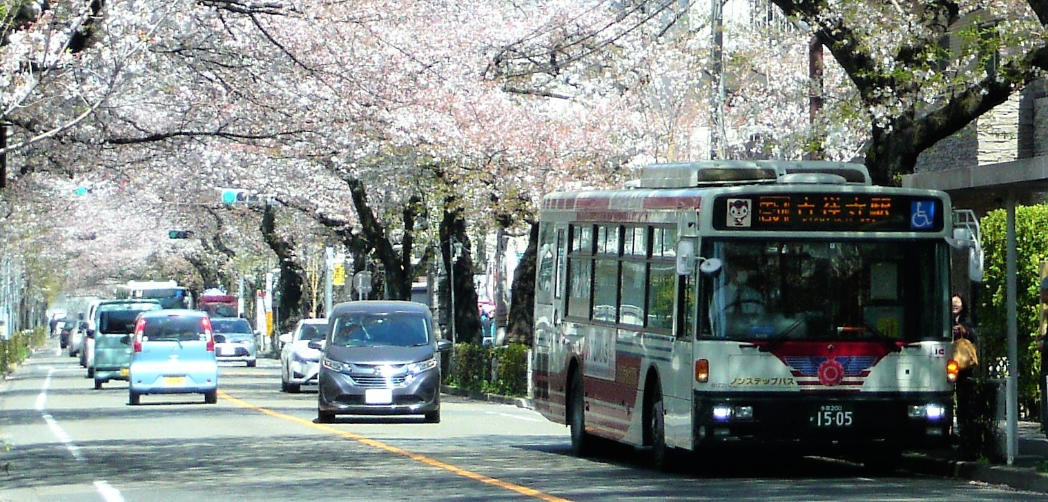 関東バス・桜並木(武蔵野)