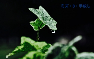 IMG_2728.jpg