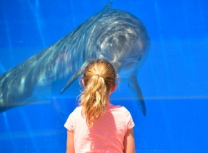 dolphin-1548448_640.jpg