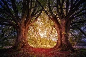 tree-3384831_640.jpg