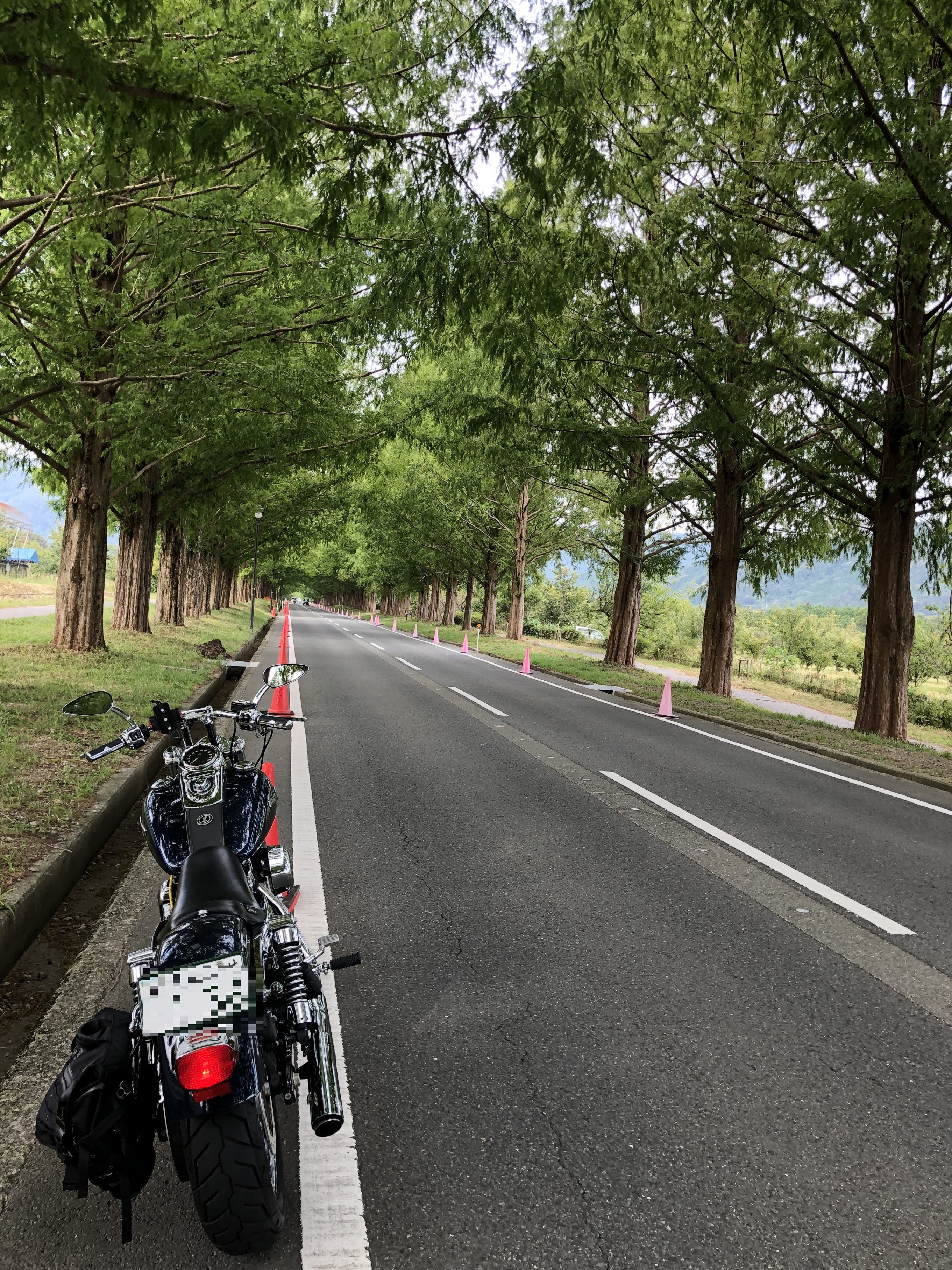 motorcycle-touring-harleydavidson-metasequoia-row-of-trees-superb-view-2.jpg