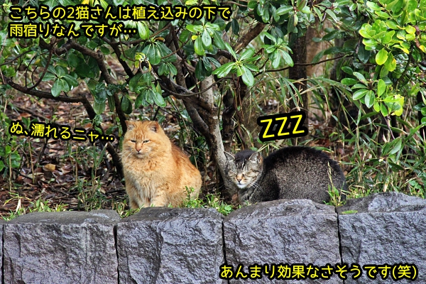 猫 雨宿り