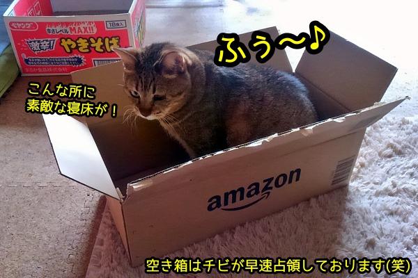 あんか 猫