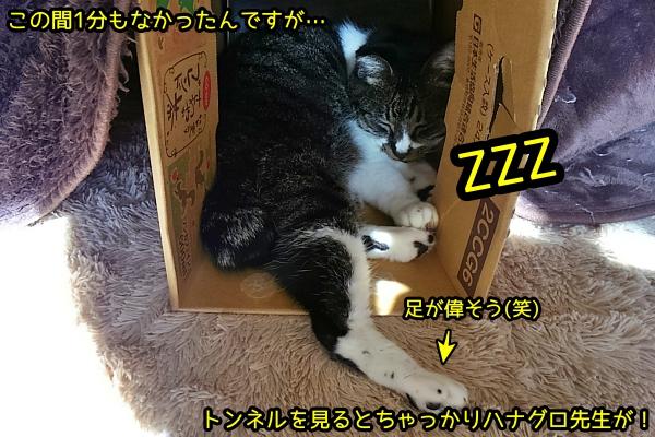 猫 お昼寝