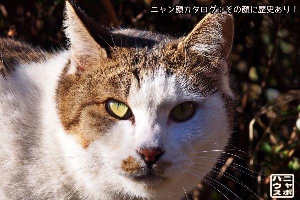 ニャン顔NO175 サバトラ猫さん