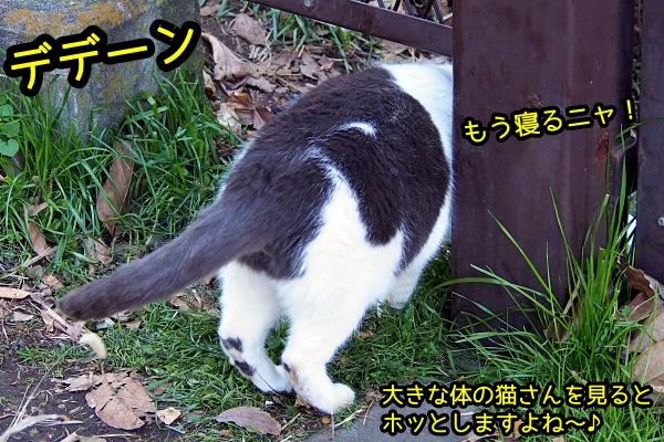 デブ猫さん