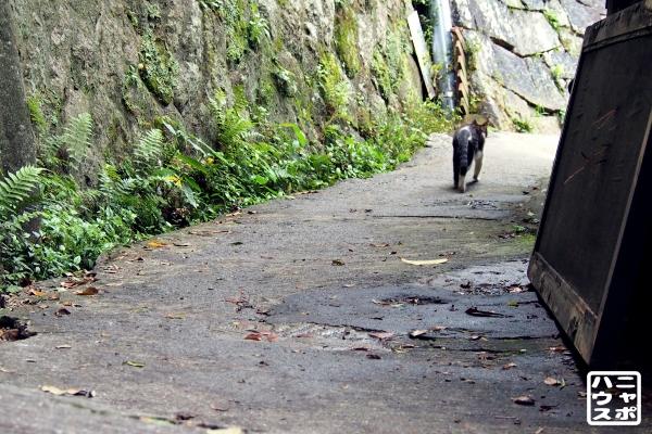 尾道 猫の細道 福石猫