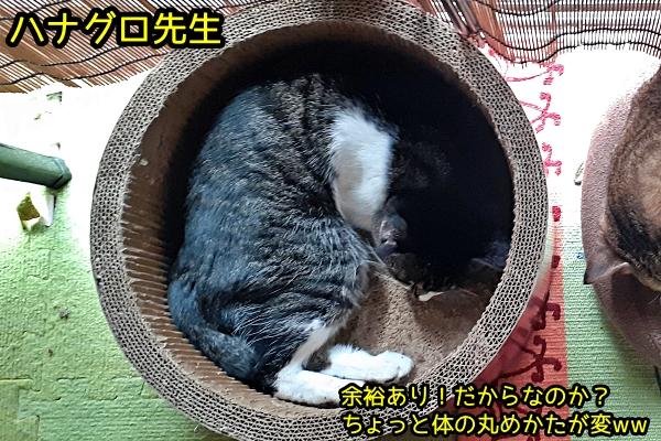 ガリガリサークル 猫