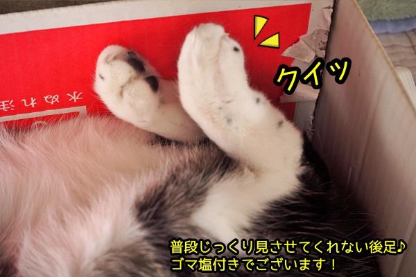 猫 熟睡 爆睡
