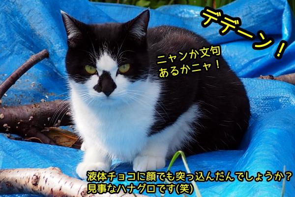 鼻が黒い猫
