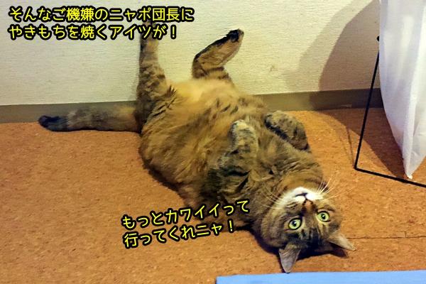 猫 卑怯な攻撃