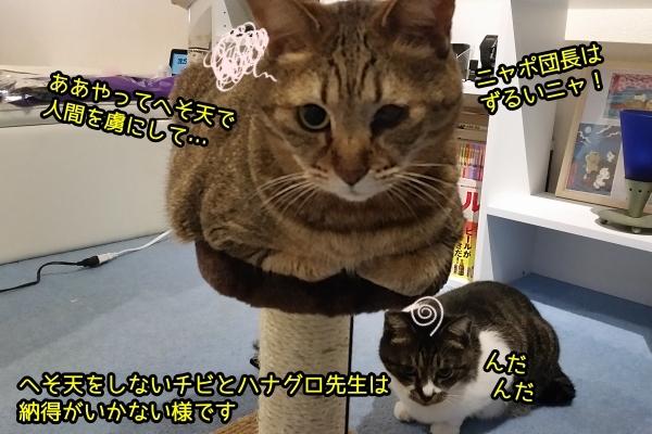 猫 へそ天 足ピン