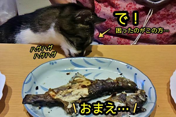 猫 イワナ