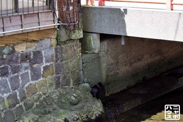 橋の下 黒猫