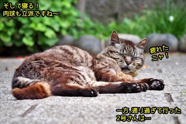 猫 上下関係
