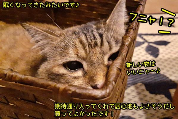ダイソー 籠