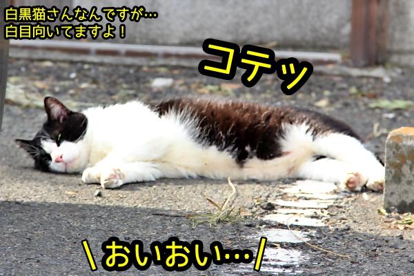外猫 爆睡