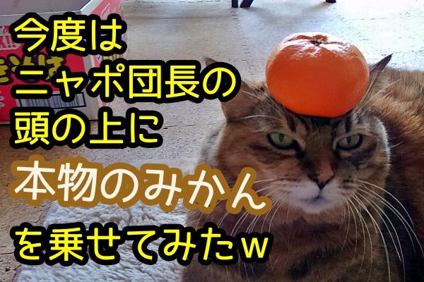 猫の頭の上 みかん