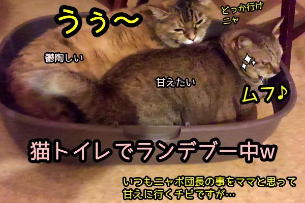 猫 揉み込み