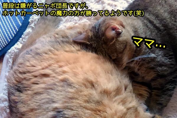 猫 顔をうずめる