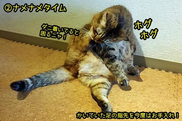 猫 お手入れ