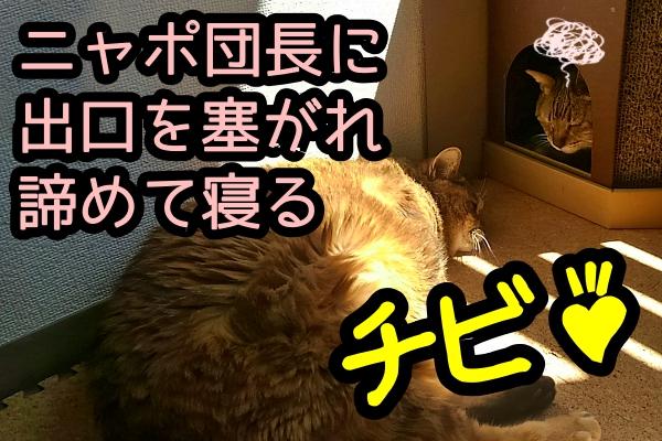 猫 おもしろ