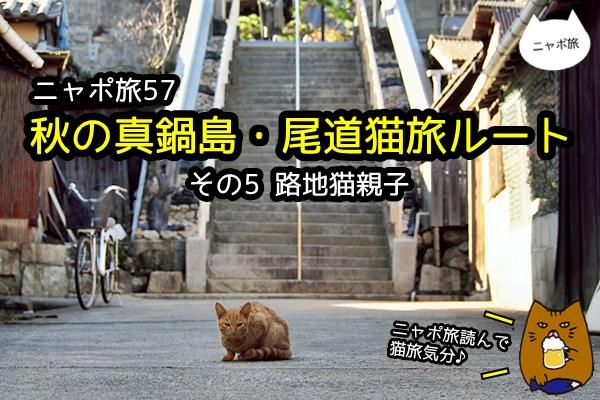 真鍋島 猫 ニャポ旅57 その5
